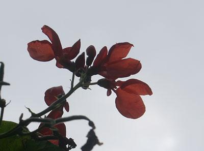 Mystery bloom3r