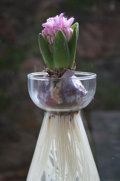 Hyacinthvase