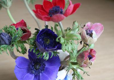Mixed-anemones