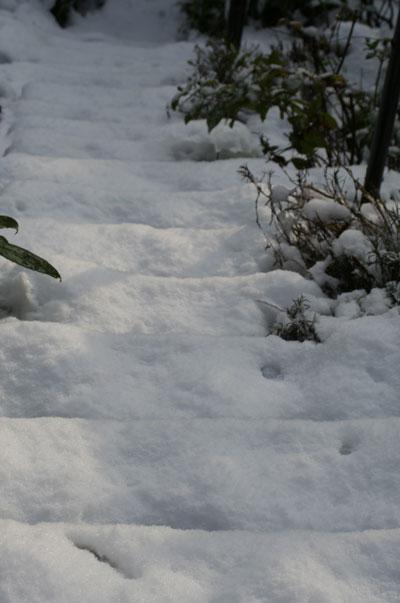 Snowy-steps