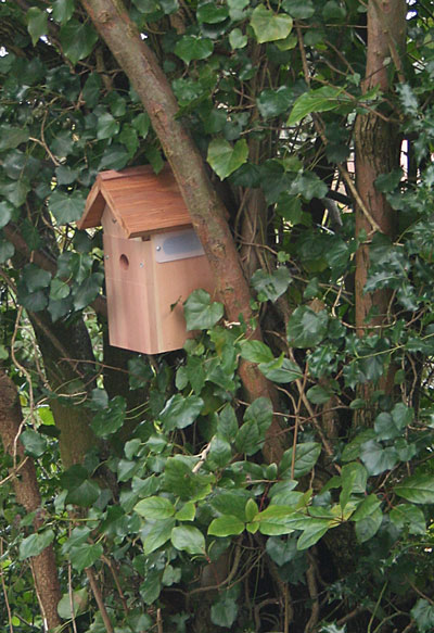 Birdbox-with-camera
