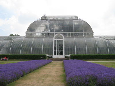 Kew-palm-house-lavender