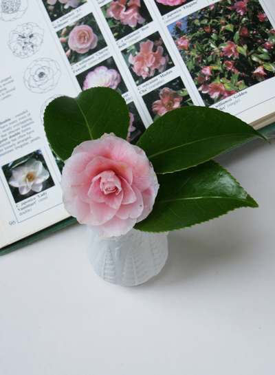 Camellia-and-RHS-reference