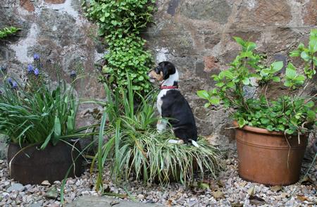 Posing-Puppy